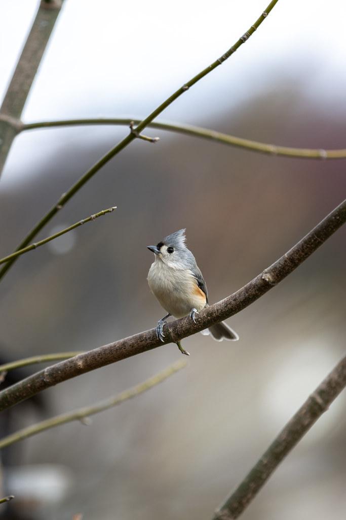 Birds In Bokeh 1