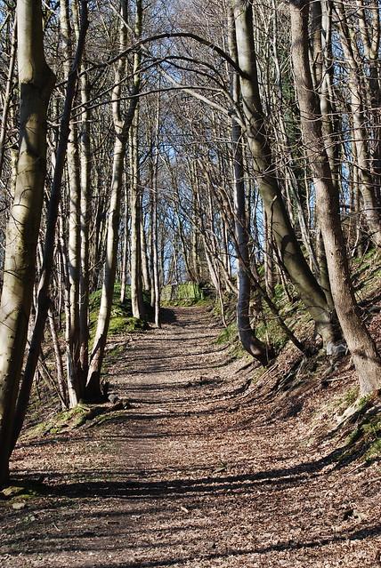 Woodland walk .......