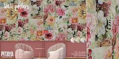 Pitaya - Wall Posters @ Bloom
