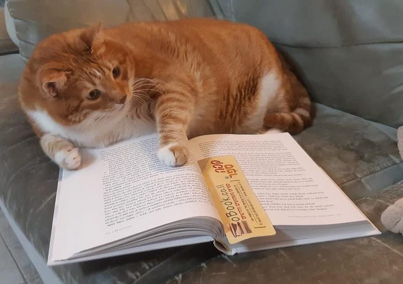 Cat-book-3