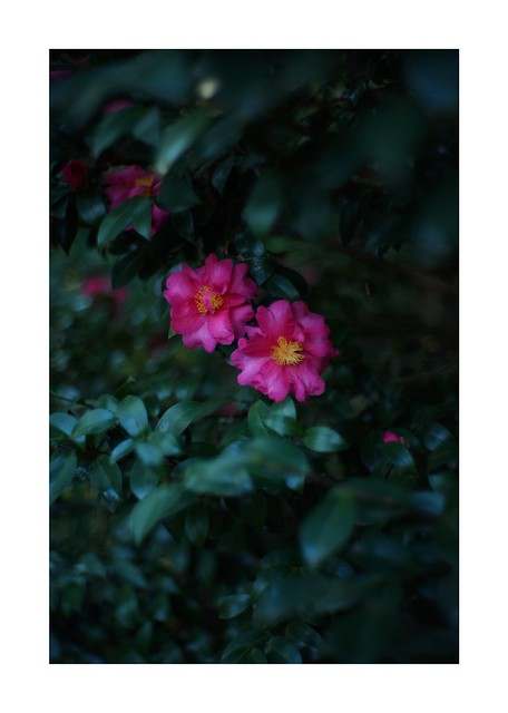 This work is 1/30 works taken on 2020/12/6 - * SONY ILCE‑7M2 / Lomography New Jupiter 3+ 1.5/50 L39/M *