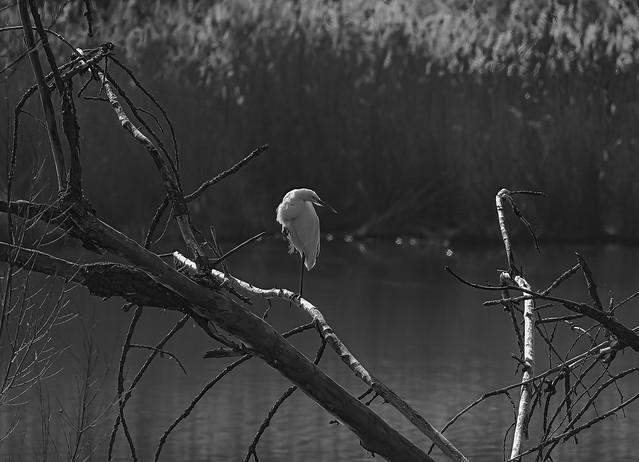 Ein Einbein Vogel