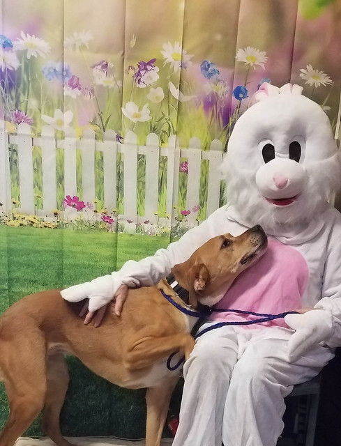 Easter Bunny Visits the Farm