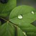 Drop on green!! - [Explore 3-31-2021]