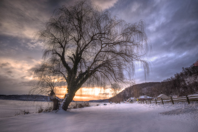 Winter's Willow