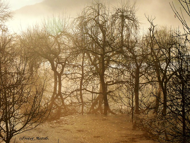 Sun & Fog I