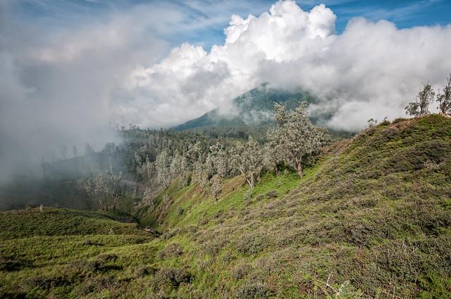 Slopes of the Ijen volcano - Java Island - Indonesia