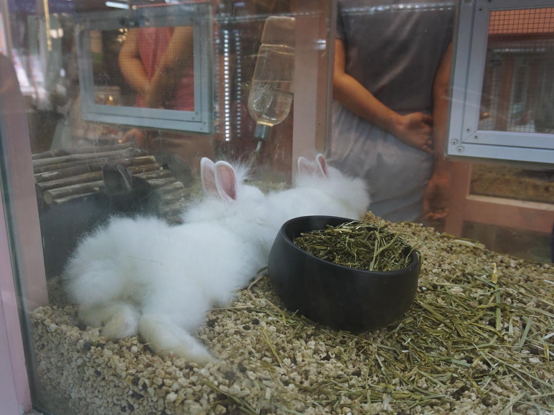furry rabbits