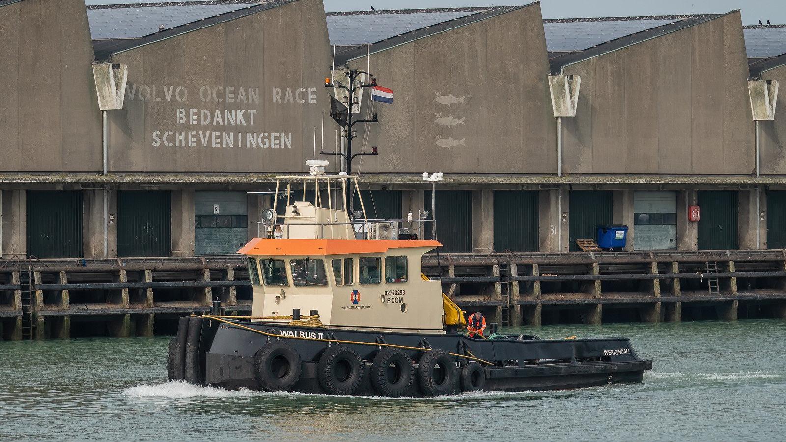 Walrus II