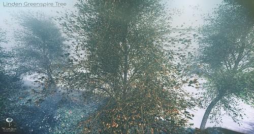 The Little Branch - Linden Greenspire Tree - The Mens Dept