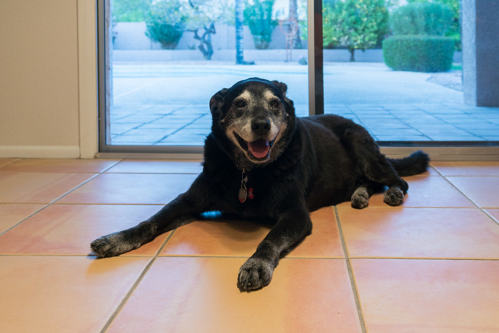 Our dog Ellie relaxes on the tile of the rental house right after we arrived in Arizona on March 31, 2018. Original: _DSC5443.arw