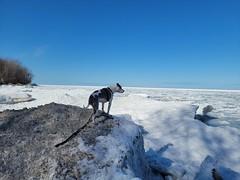 Juneau at Lake Erie Bluffs