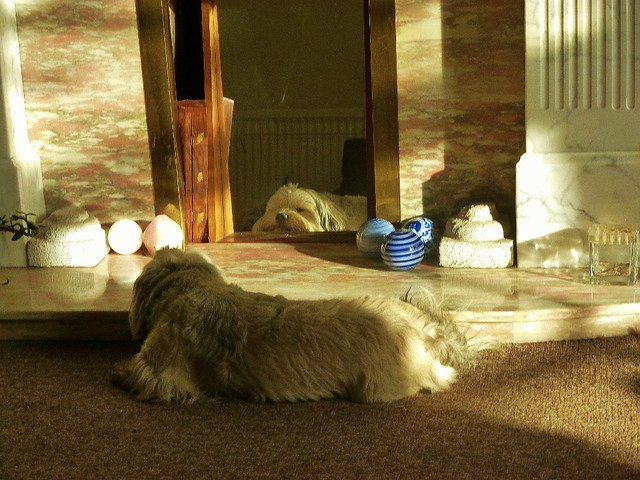 Alfie snoozing