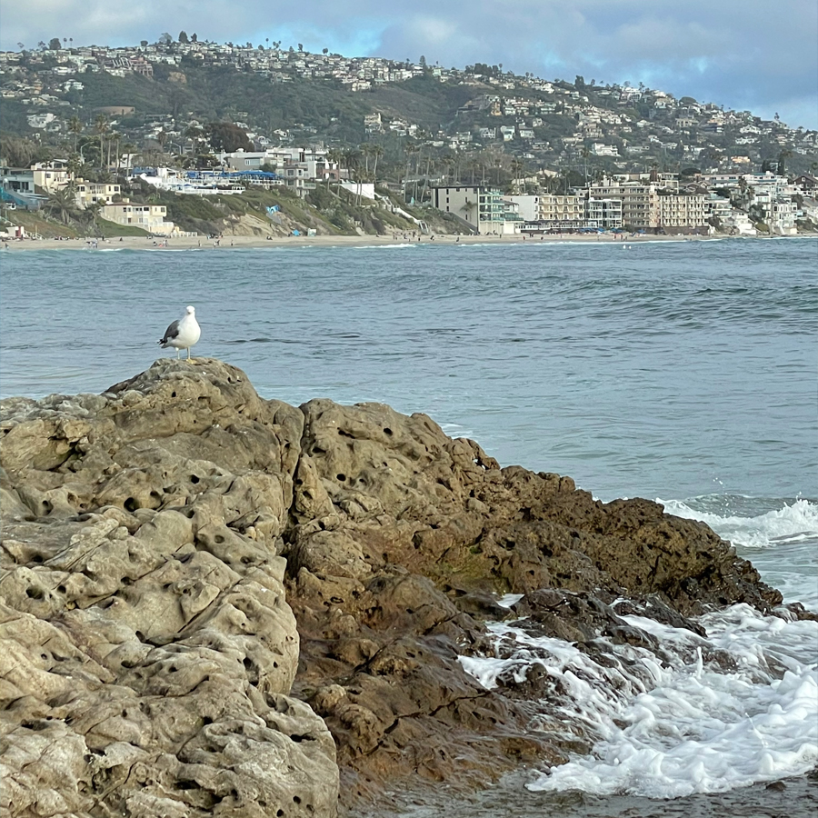 seagull-on-a-rock-on-main-beach