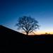 The Tree Sunset