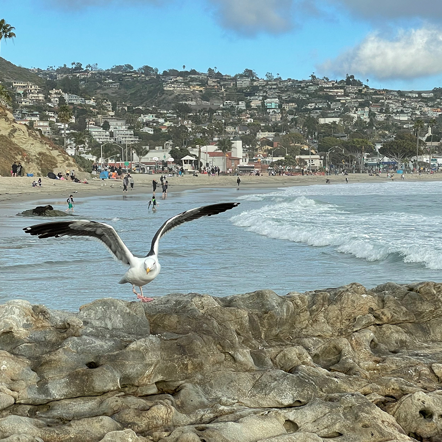 seagull-on-main-beach