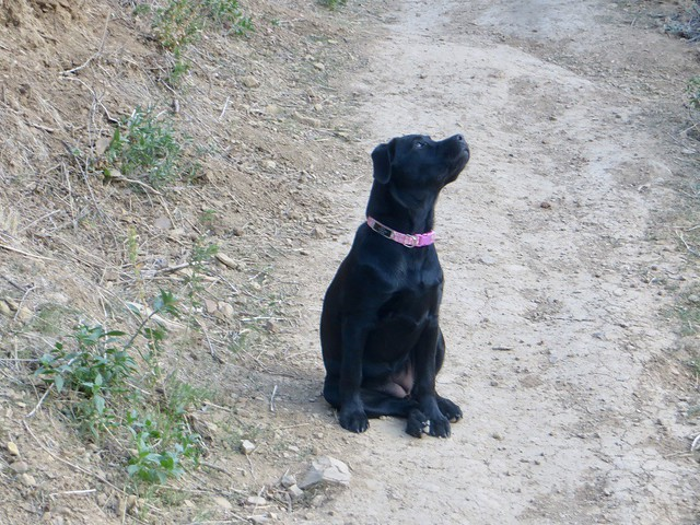 the wild puppy watches the wild parrots fly by