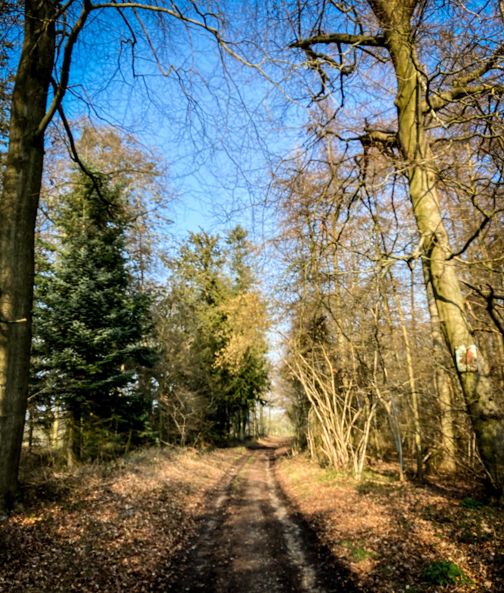 Ipsden woods