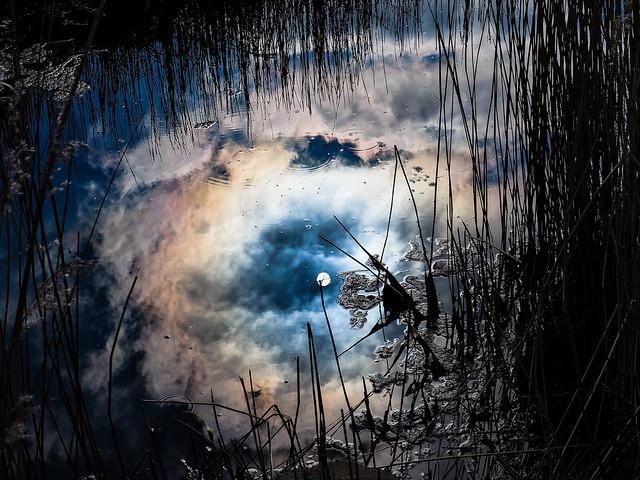 Week 9 Reflections