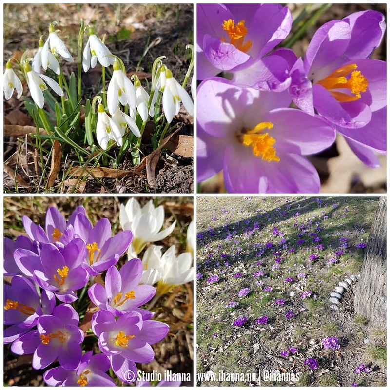 Spring in Sweden Photos by Hanna Andersson