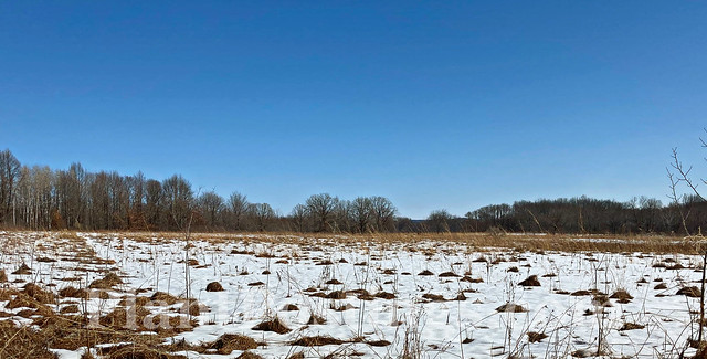 prairie late winter