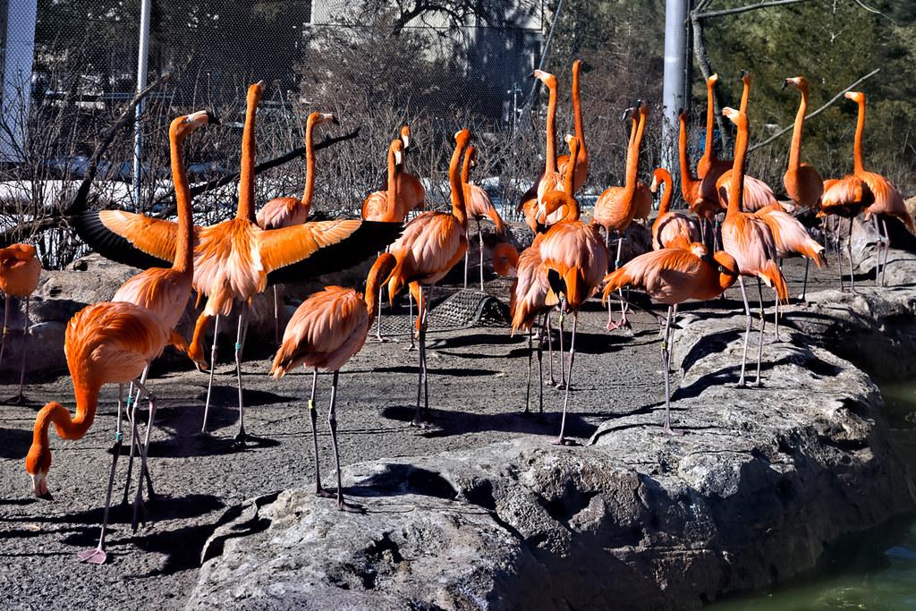 Flamingos (4)