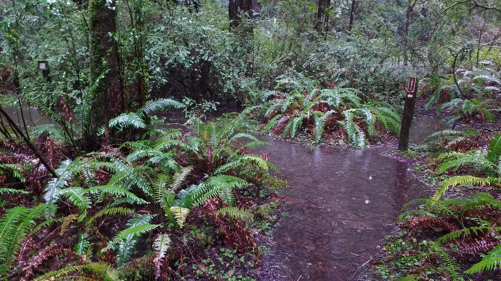 Flooded Nature Trail, Grizzly Creek Redwoods State Park  02/10/2017
