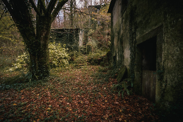Fábula sutil enardecida, hojas derivadas a la nada, ruina que presagia enamorada, versos insaciables en su aldaba/Verses derived to nothing.