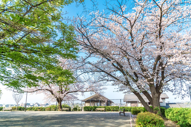 At Zentoji Park : 禅当寺公園にて