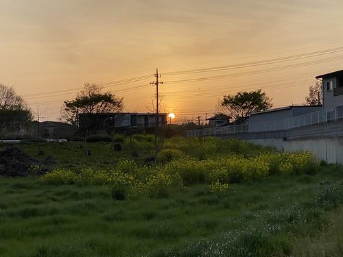 夕陽と菜の花