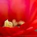 Cactus Flower, 6.21.17