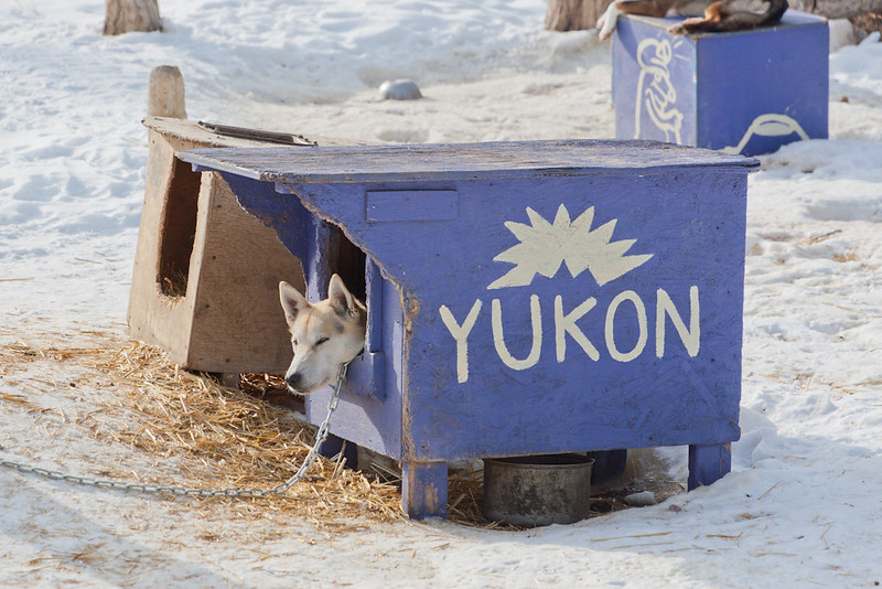 Yukon_IMG_2012_03_27-6988