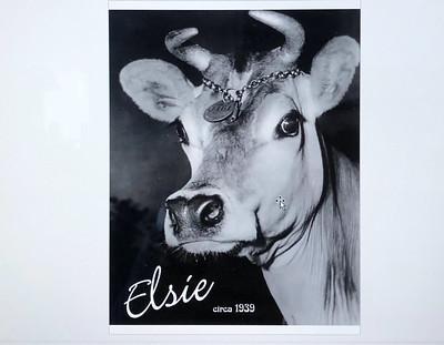 ElsieTheCow_6169-c1939
