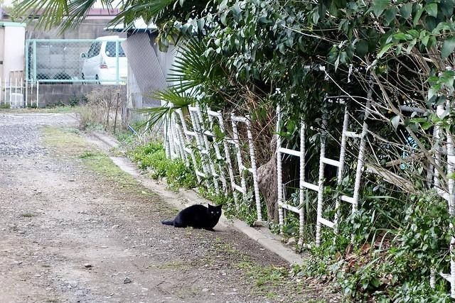Today's Cat@2021−03−09