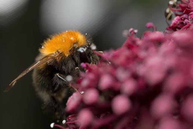 Pollen or Snow? - _TNY_8024