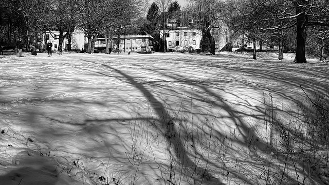 Shadows in the Snow