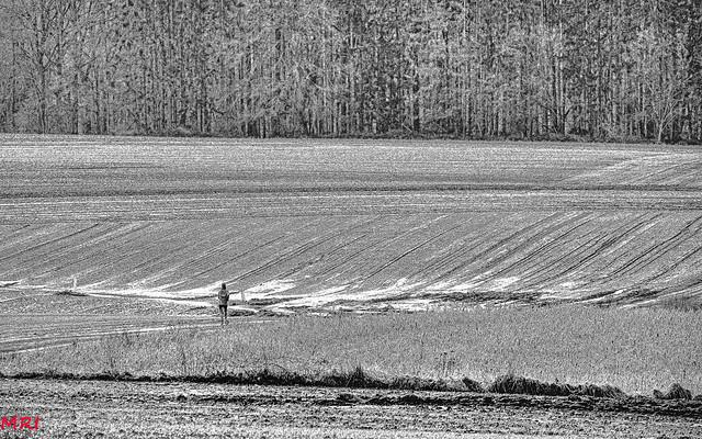 Jogging dans la campagne