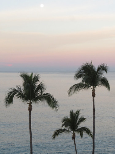 Silhouettes of palm trees in front of the supermoon setting on the ocean in early dawn in Puerto Vallarta, Mexico