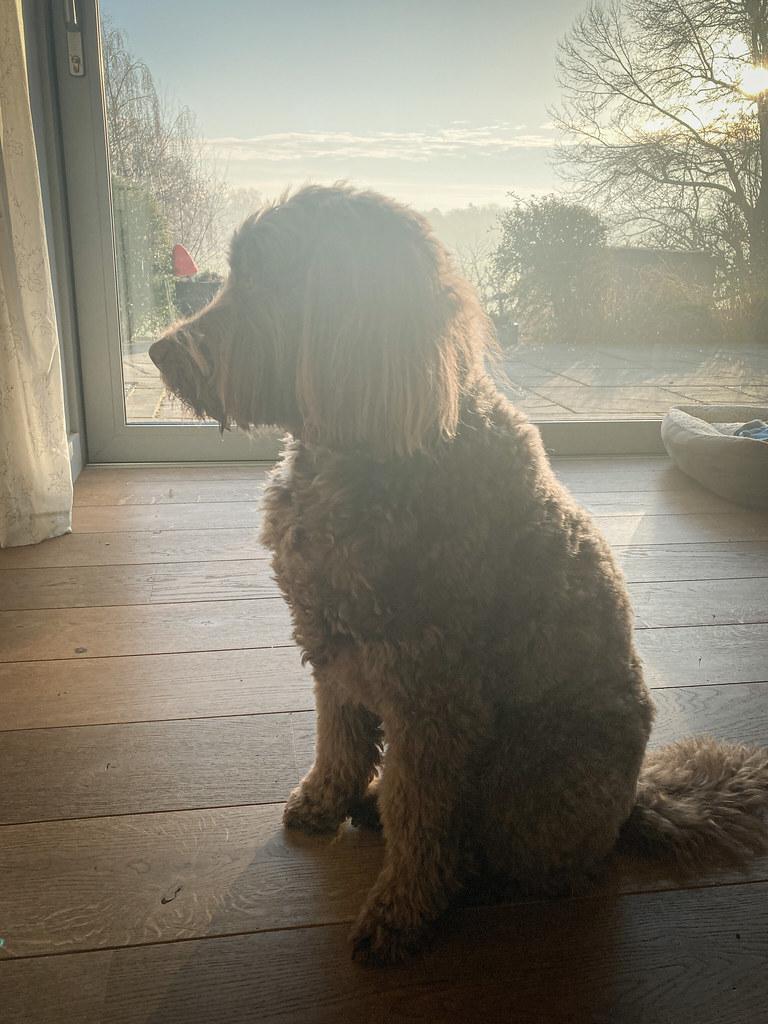 Ewok basking in the sun