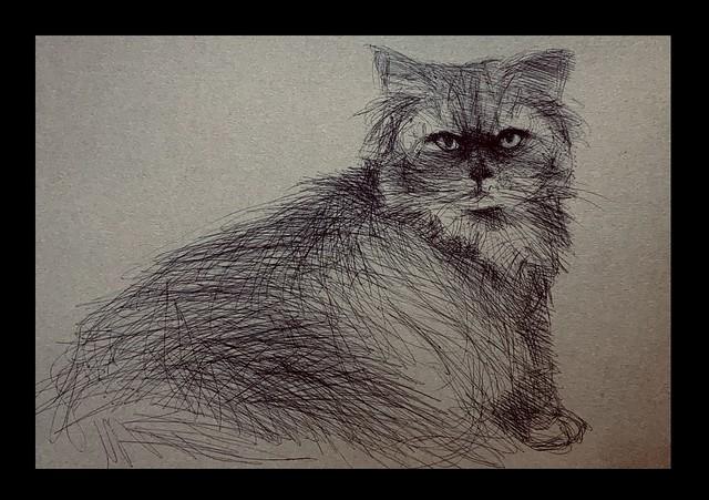 A grumpy friend of Jenkins. Bic Ultra Fine ballpoint pen drawing by jmsw on recycled card.
