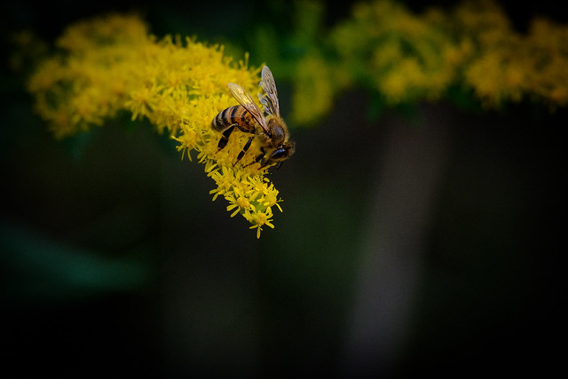 Bee on a Branch