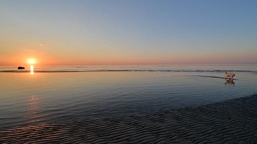 capecod skaket beach sunset atlantic ay ocean coast calm dog