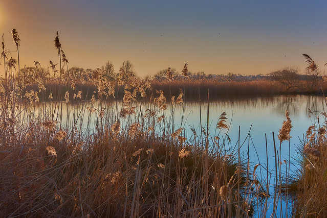 Late afternoon in the reeds