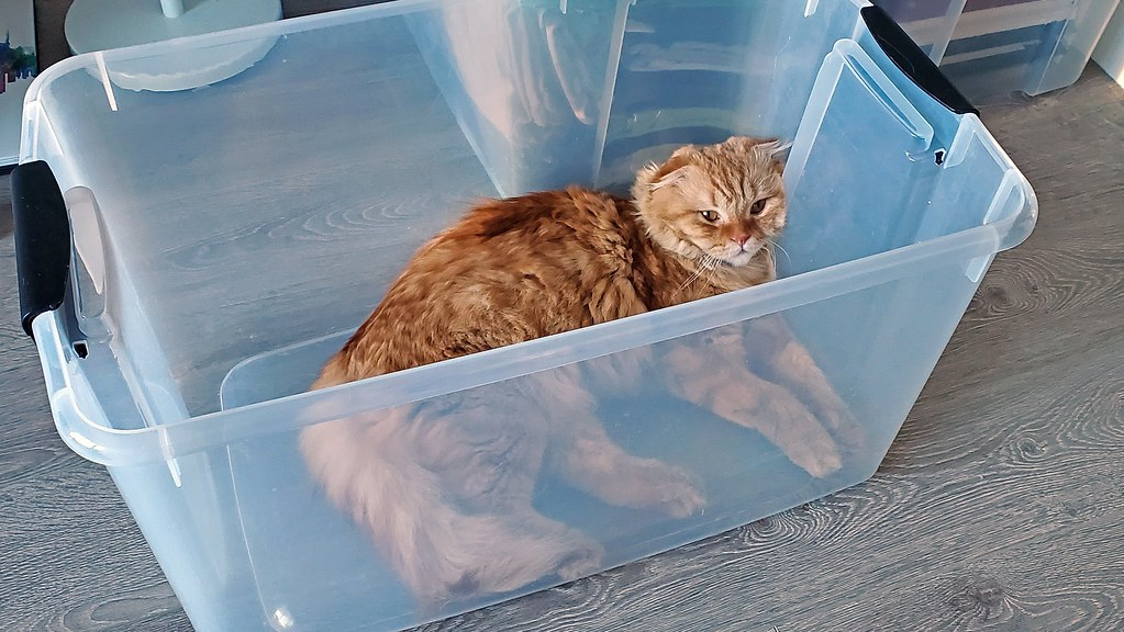 Pumpkin sleeping in a storage container