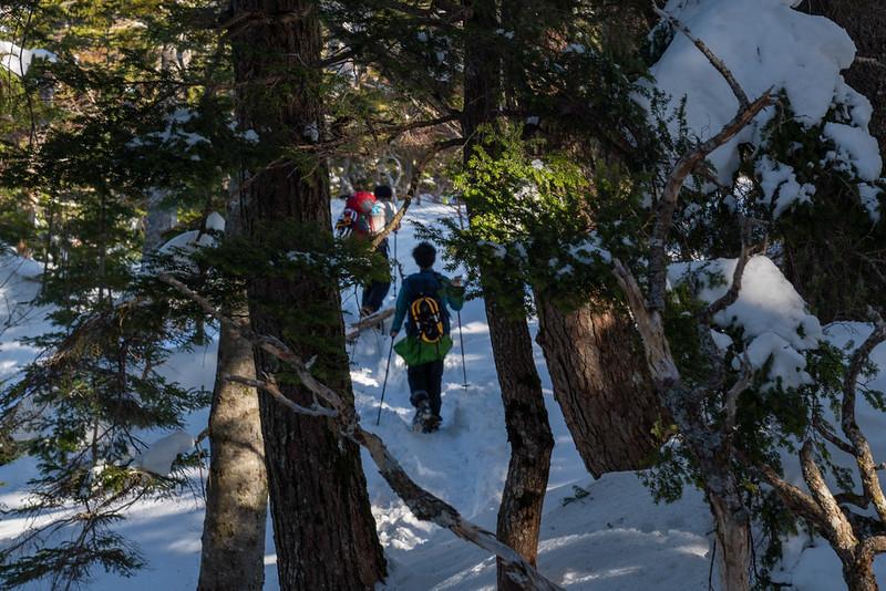 冬の焼岳の樹林帯を歩く