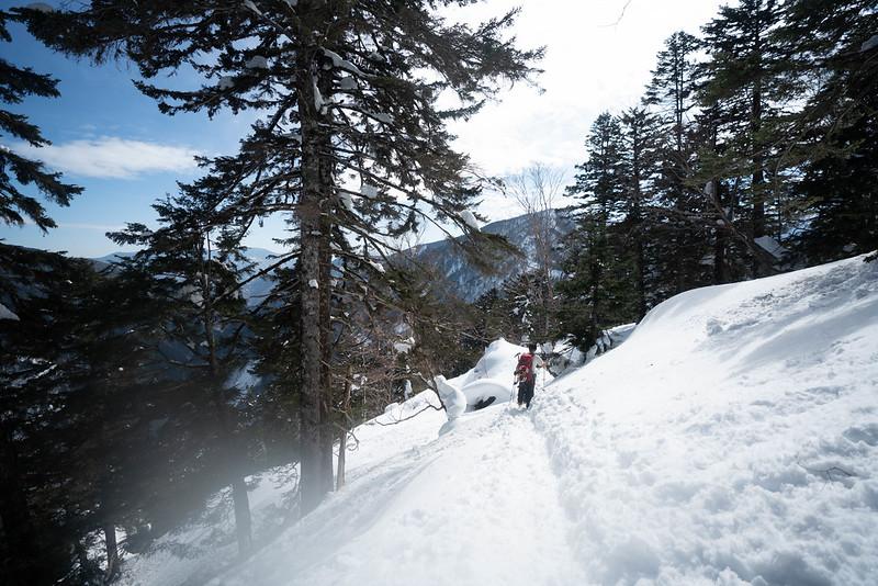 冬の焼岳の樹林帯