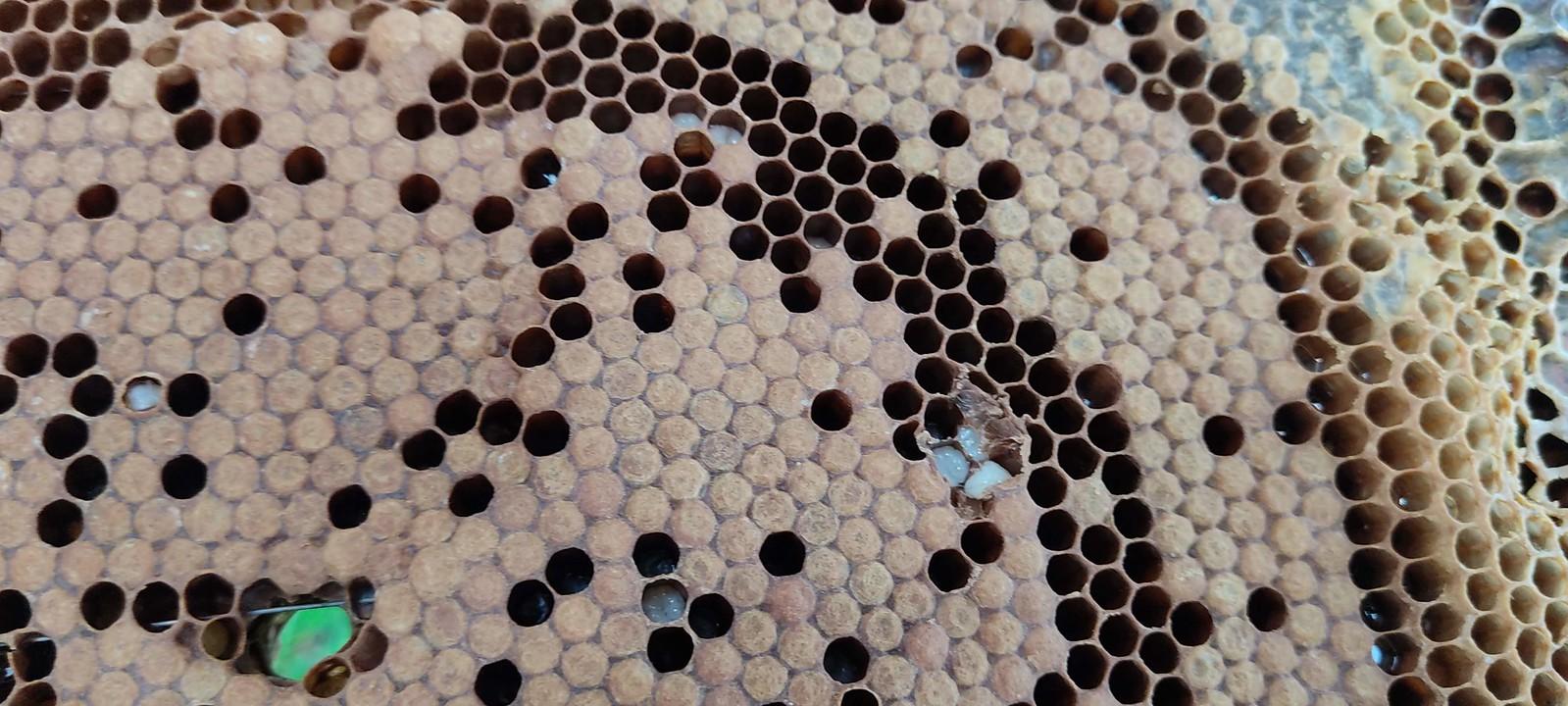 La casa de les abelles CM