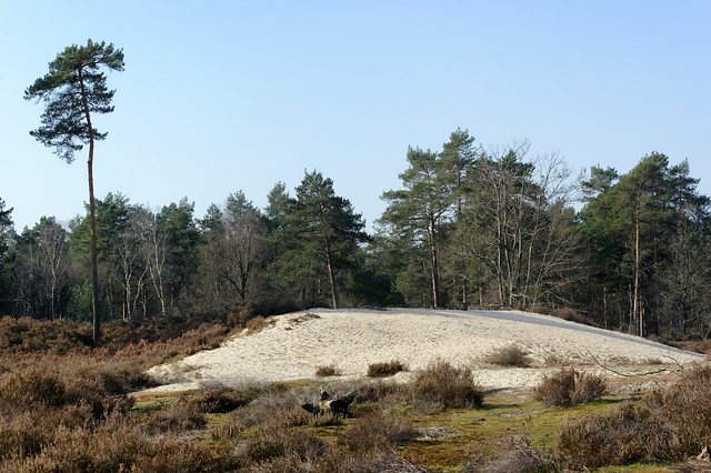 Beorlots sand dunes