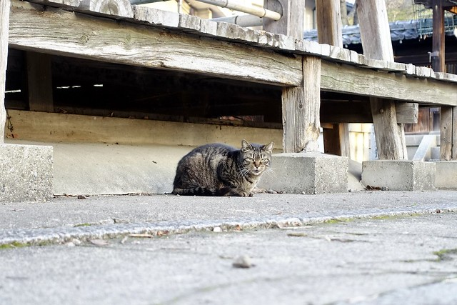 Today's Cat@2021−03−09