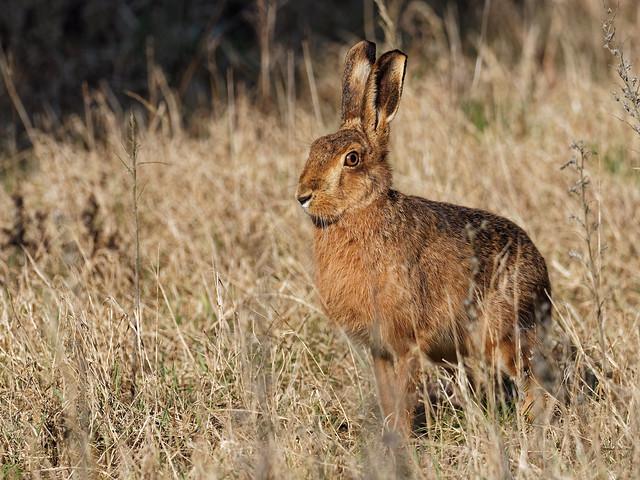 Hare Exchange